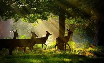 Cách tạo tia nắng trong rừng với HDR Toning