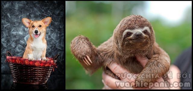 Mẹo 'lai' động vật với Photoshop
