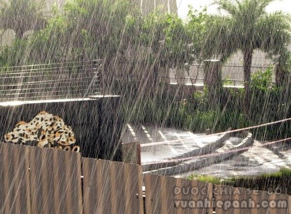 rain6-714893-1370259909_600x0.jpg