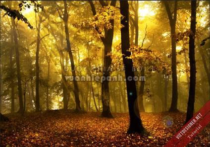 Cách tạo tia nắng trong khu rừng ảo với HDR Toning
