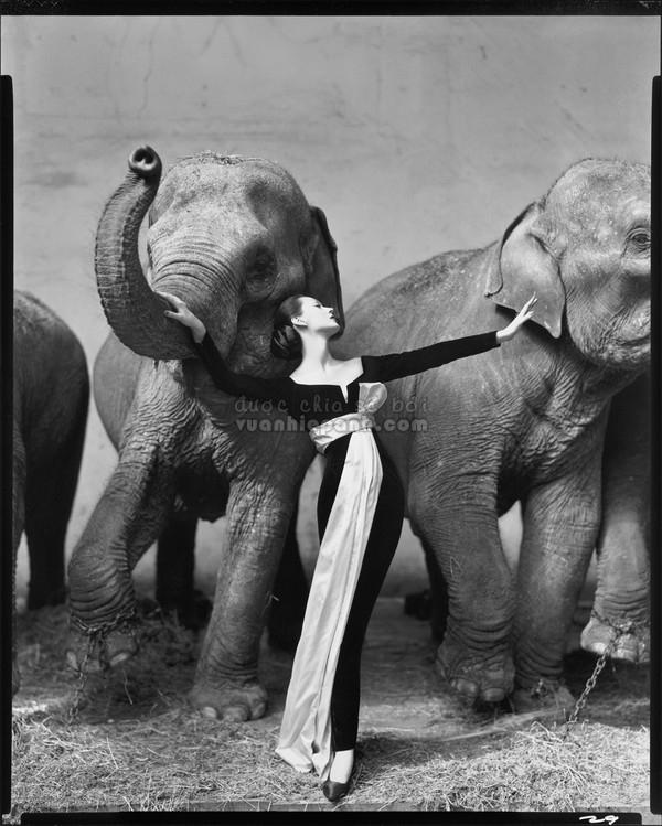 avedon-dovima-elephant-02-741d5